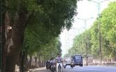 圖為河內市范文同街兩旁的樹木。(資料圖來源:互聯網)