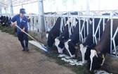 林同省飼養和供應有機牛奶。