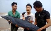 三名年輕漁民將該海豚送回大海。(圖源:互聯網)