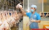 安全達標雞肉封閉生產線。