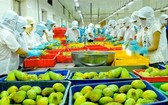 累計今年前兩個月,果蔬出口額達7億3750萬美元,同比增5.2%。(示意圖源:互聯網)