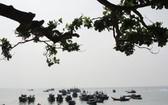 李山海保存區一瞥。(圖源:V.Q.C)