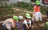 小朋友參加種植活動。