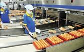 平抑價格蛋類生產流程。