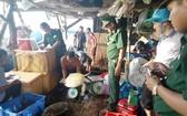 職能力量查獲的非法圈養之珍稀海龜共16隻。(圖源:黃忠)