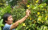 阮玉方的價值上千萬元梅花提早綻放。