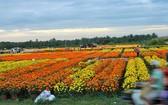 丐芒花村一片百花爭艷的景象。