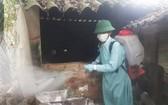 太平省進行消毒防控非洲豬瘟蔓延。(圖源:慶玲)