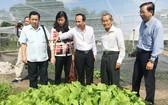 市越南祖國陣線委員會每年進行考察、檢查農產生產領域的食品衛生安全。