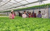 向Mega Market經銷中心供貨的無公害蔬菜農場。