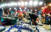 本市若干集散市場的魚肉海產貨源充足,售價不變。(圖源:互聯網)