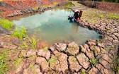 南部多地稻田遭受嚴酷的乾旱和海侵之災。(圖源:互聯網)