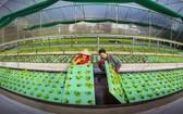 農民引進高新技術,提升農業生產價值。