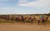 考察團隊騎駱駝!