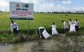 農民在田野上收集農藥廢棄包裝。(圖源:nongnghiep.vn)