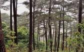 做好護林工作可為國家經濟帶來巨大利益。