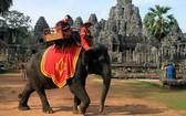 吳哥窟管理當局表示,利用大象進行商業行為並不恰當,將自2020年初起禁止騎象。(圖源:互聯網)