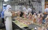 各類家禽肉產量增加以滿足市場需求。