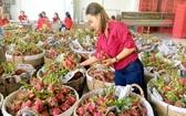 Vina T&T Group公司向美國外銷不少水果。