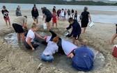 鯨魚集體擱淺海灘,上千民眾助其重回大海。(圖源:互聯網)