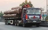 既超載又缺乏安全性的運送巨木卡車在1A國道上行駛。(圖源:VOV)