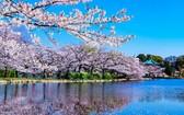 上野公園是東京的賞櫻勝地之一。(圖源:互聯網)