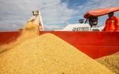 聯合國糧食及農業組織說,新冠肺炎疫情在全球蔓延致使勞動力短缺和供應鏈中斷,可能影響一些國家和地區糧食安全。(示意圖源:互聯網)