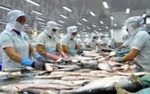 圖為查魚片加工工段。(圖源:互聯網)