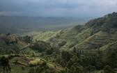 襲擊事件發生在北基伍省維龍加國家公園。(圖源:AFP)