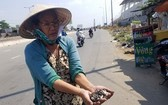四姑在新東區車站門前拾到大量自製釘子。