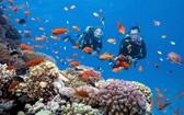 海洋旅遊仍是旅行社重點開發的旅遊方式。(圖源:田升)