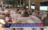 今起企業獲准進口生豬。(圖源:VTV視頻截圖)
