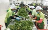 國際無公害蔬菜生產與供應股份公司的出口農產品加工工序。