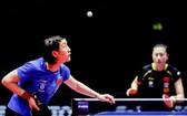 乒乓球(圖源:互聯網)