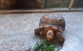 珍稀閉殼龜釋放前近照。(圖源:楊光)