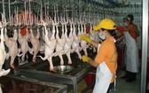 雞肉價格近日大幅上漲創新高。(示意圖源:互聯網)