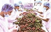 越南荔枝外銷國際市場。