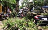 鳳尾大樹枝折斷砸中停在路旁的一輛汽車和多輛摩托車。(圖源:定阮)