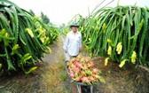 九龍江平原將促進發展水果種植面積。(示意圖源:互聯網)
