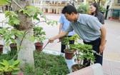 """老師給校園內樹木做""""體檢""""。(圖源:丁玄)"""