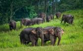 環保團體世界自然基金會10日表示,全球野生動物數量自1970年以來減少超過三分之二。(圖源:考艾國家公園臉書)