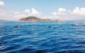 一群海豚在海面上跳水嬉戏。(圖源:明雅)