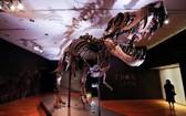 """世界上最完整暴龍化石之一的""""史丹""""。(圖源:路透社)"""