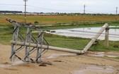 一根電線桿遭颱風吹斷倒塌。(圖源:武盛)