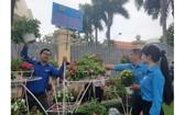 共青團員在佈置盆栽。