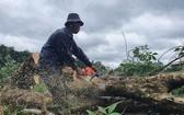 工人砍伐橡膠樹以將場地移交給施工隆城機場項目第一階段的單位。