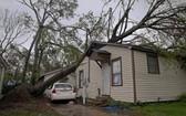 """當地時間10月10日,美國路易斯安那州查爾斯湖的居民遭受颶風""""德爾塔""""襲擊,樹木倒塌壓在房屋上,不少居民選擇撤離。(圖源:互聯網)"""