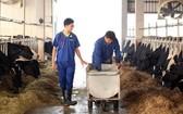 奶牛養殖場一瞥。(圖源:G. Nam)
