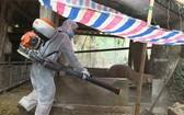 獸醫人員在廣平省廣澤縣符化鄉的一個傳統小養豬場戶及其附近進行噴射消毒。(圖源:黃福)
