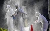 滋賀縣13日宣佈,東近江市一家養雞場檢測出H5亞型高致病性禽流感病毒,相關部門已開始撲殺這家養雞場飼養的約1萬隻雞。(圖源:路透社)